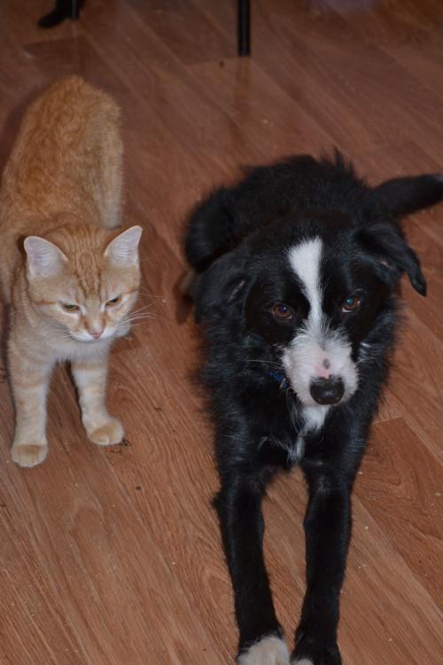 Milli und Hund