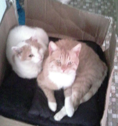 Morris und Fenja