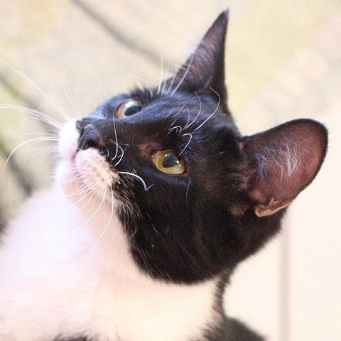 vermittlungen hunde katzen suchen dringend ein zuhause news notf lle wenn sie unsere. Black Bedroom Furniture Sets. Home Design Ideas