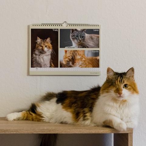 Weihnachtskarten Tiere.Foto Aktion Für Kalender Und Weihnachtskarten Tiere Aus Russland